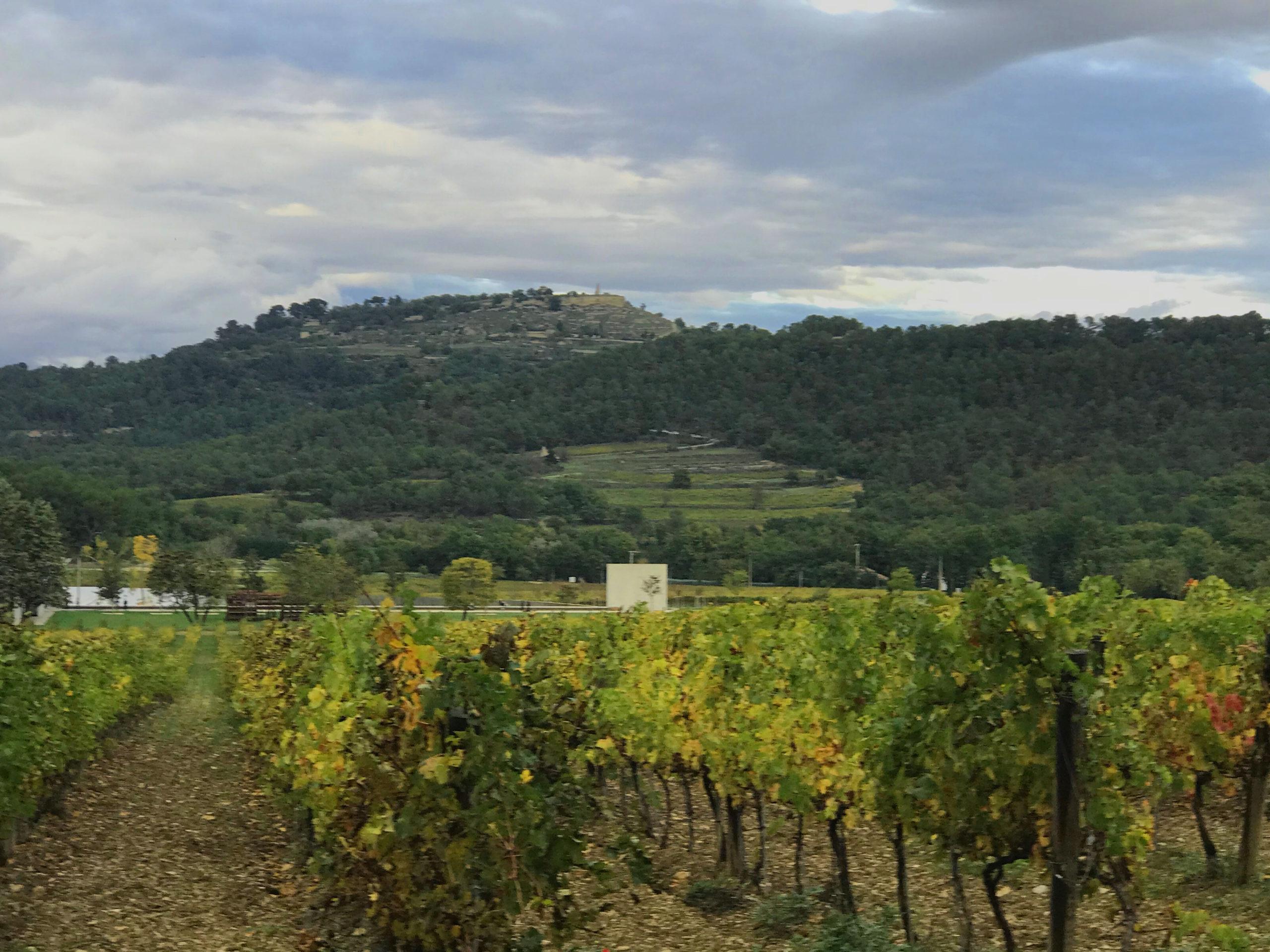 Wine tours Avignon